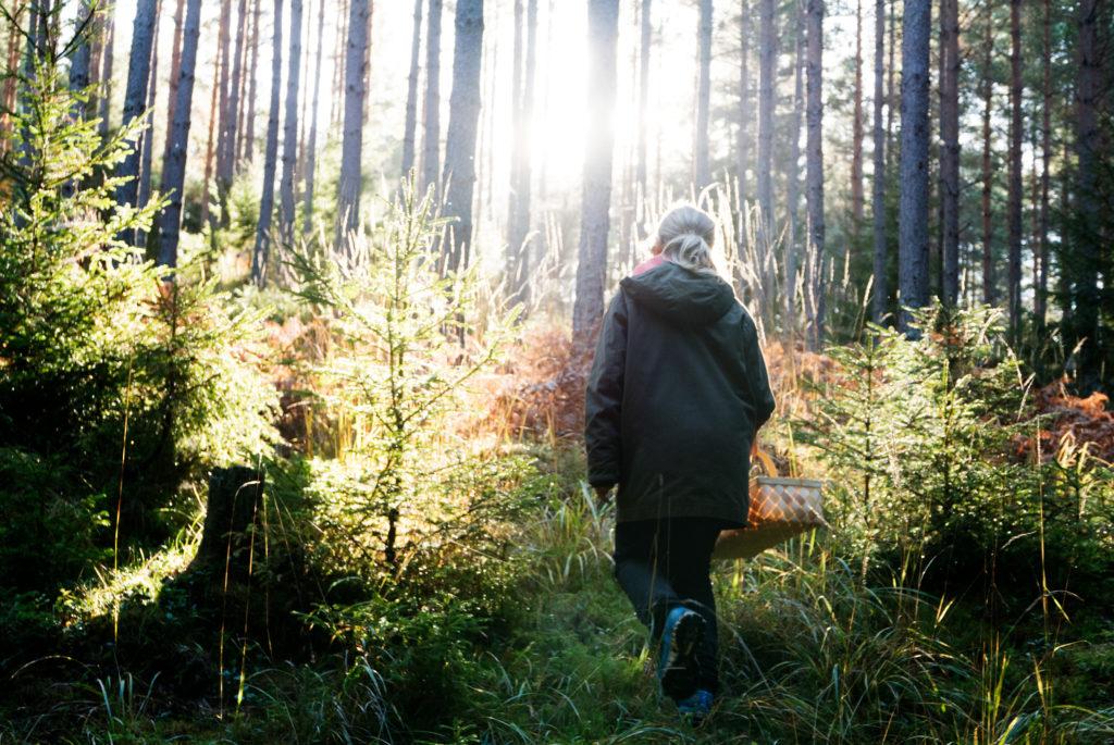LifTe スウェーデンの森を歩く