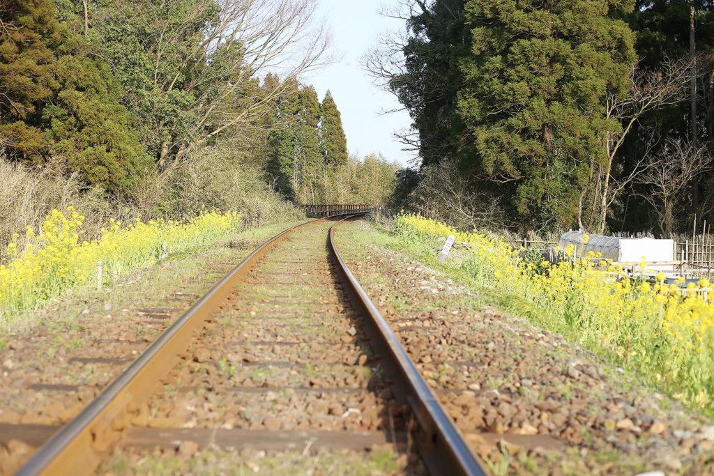 LifTe いすみ鉄道 菜の花