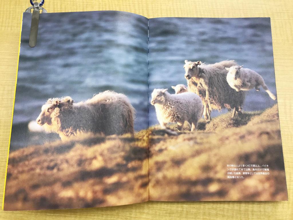 LifTe 北欧の暮らし 椎名誠 アイスランド ナショナルジオグラフィック アイスランドシープ