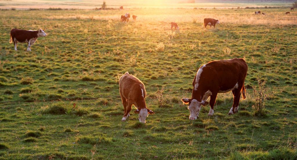 LifTe 北欧の暮らし オーガニックエキスポ2018 フィンランド 牛