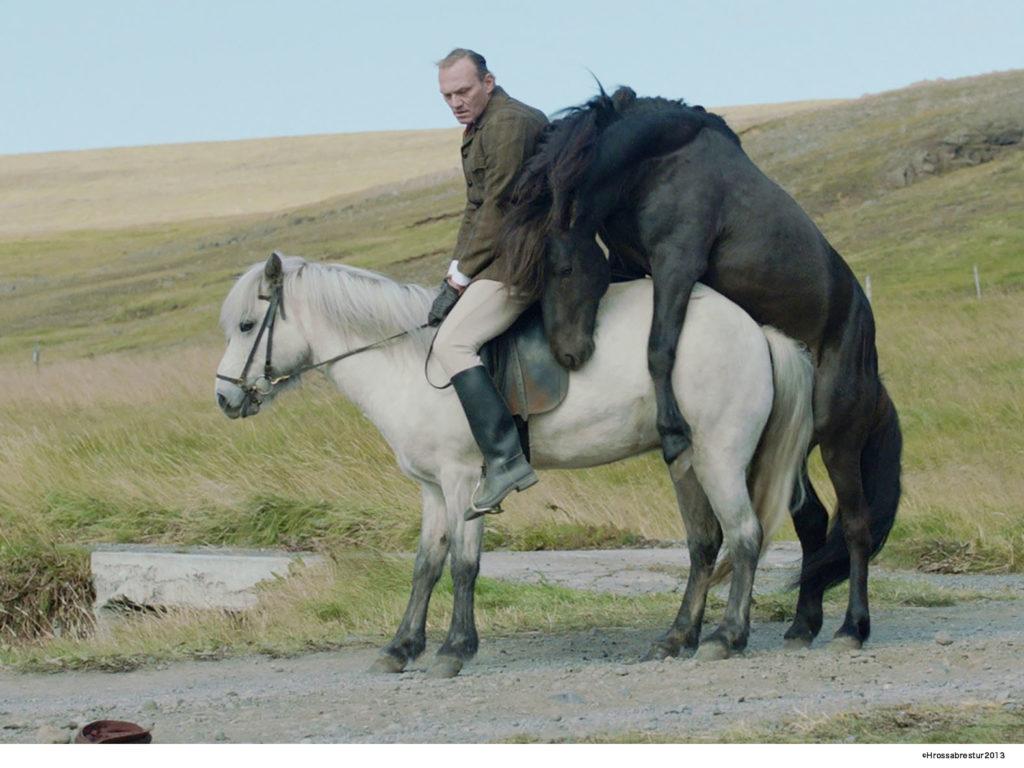 LifTe 北欧の暮らし 阪急うめだ本店 映画祭 キノ・イグルー 馬々と人間たち アイスランド
