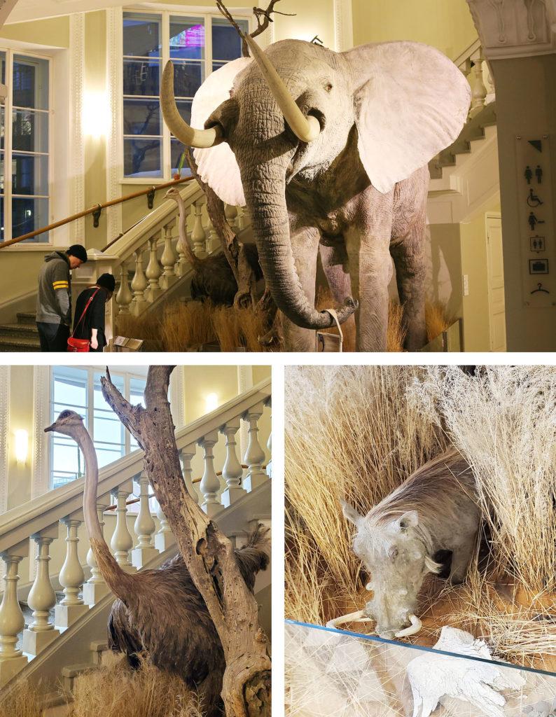 LifTe 北欧の暮らし フィンランド ヘルシンキ自然博物館 アフリカ象 ダチョウ イノシシ