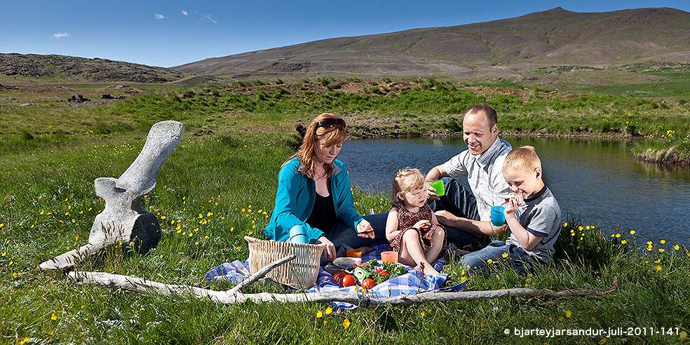 アイスランド スキル SKYR 国民食 スキムミルク アイスランド家族