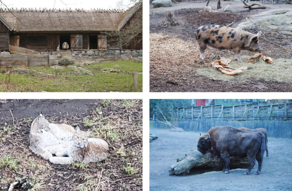 LifTe 北欧の暮らし スウェーデン ストックホルム スカンセン 動物園 オオヤマネコ ヨーロッパパイソン