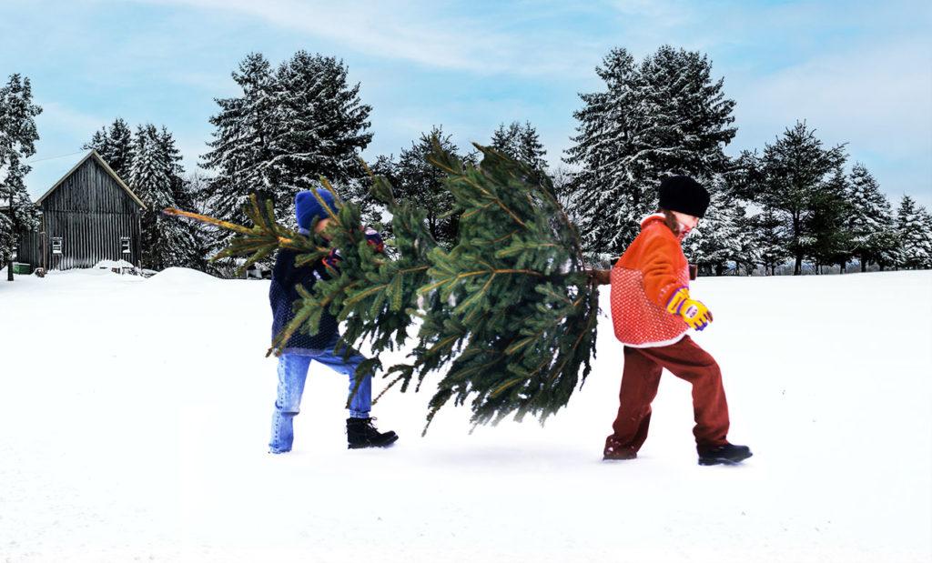 LifTe 北欧の暮らし スウェーデン クリスマスツリー IKEA イケア