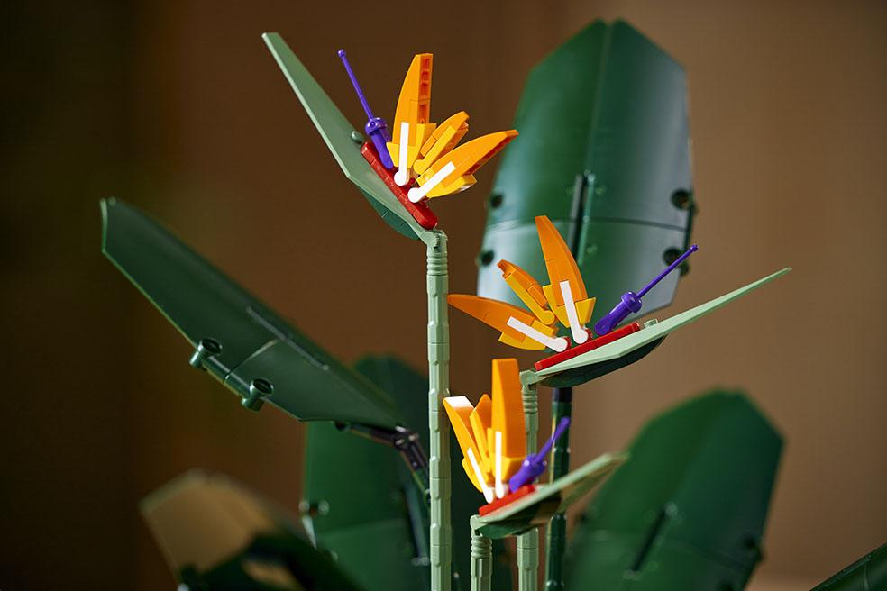 レゴ ボタニカルコレクション デンマーク ストレリチア 大人レゴ 極楽鳥花